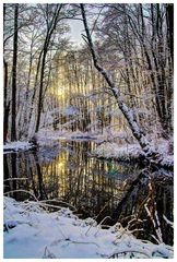 Winterlicher Erlenbruch #2