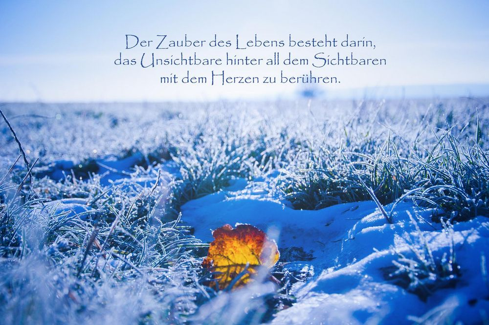 ~winterlicher Herbst~