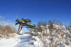 Winterlicher Leuchtturm