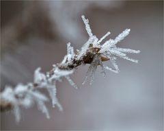 Winterlicher Morgenstern