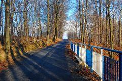 Winterlicher Nordic Walking