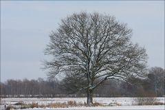 Winterlicher Sonntagmorgen Spaziergang