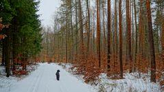 winterlicher Wald, 2 (bosque invernal, 2)