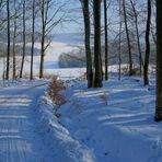 winterlicher Wald (bosque invernal)
