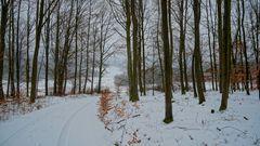 winterlicher Wald (bosque invernal)