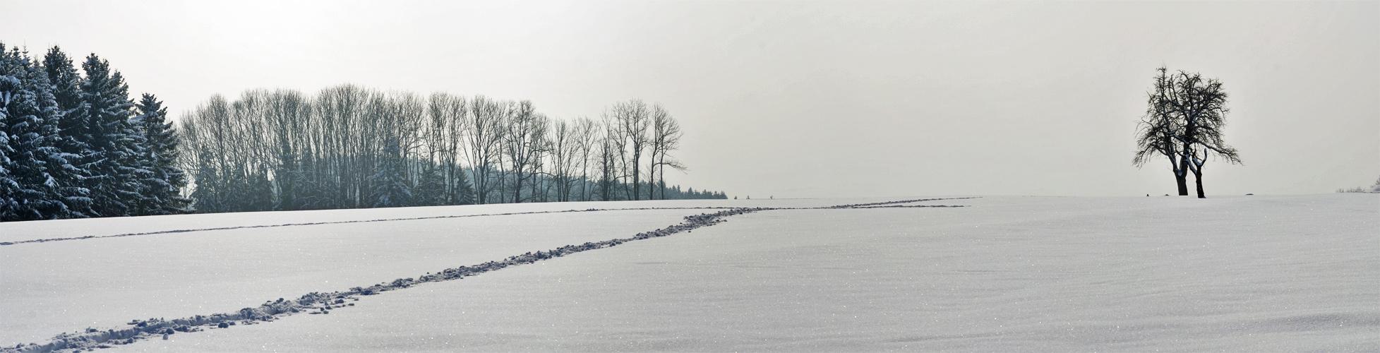 Winterliches Farbfoto