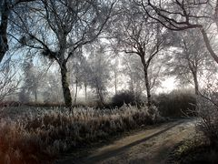 Winterliches I