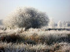 Winterliches II