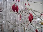 -Winterliches Kunstwerk-