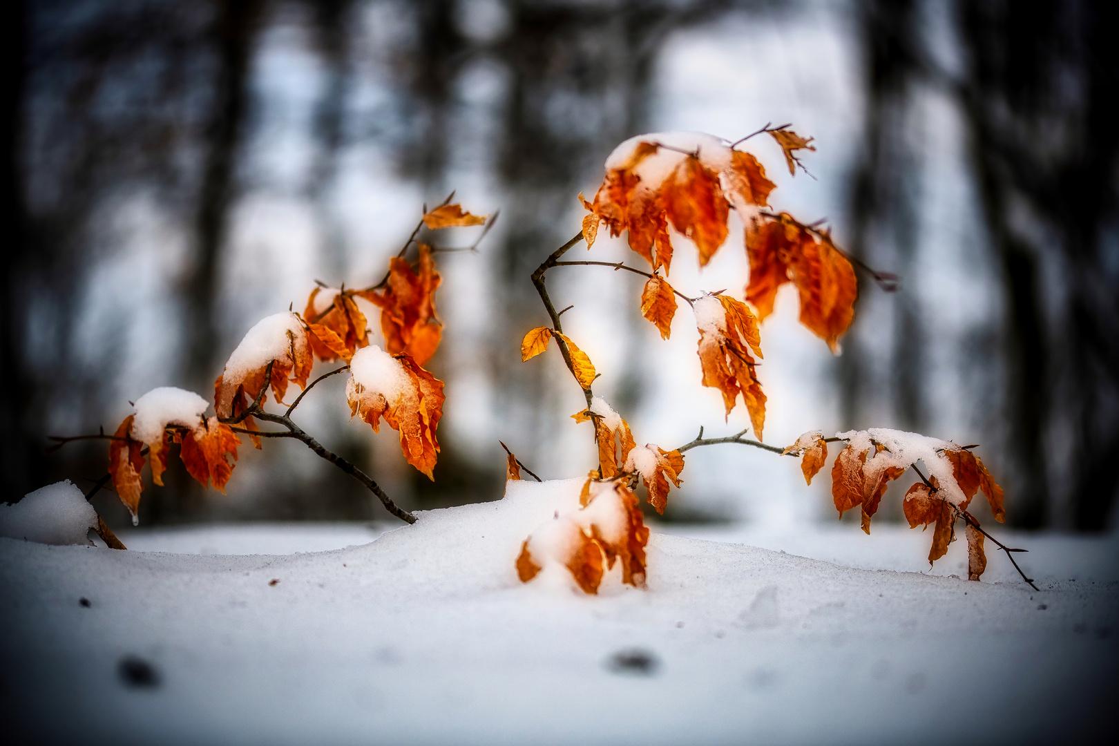 Winterliches Leuchten . . .