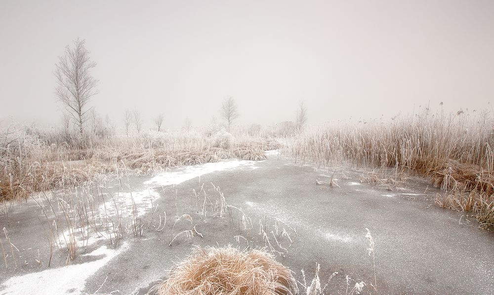 Winterliches Moor
