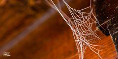 Winterliches Spinnennetz