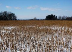 winterliches Stoppelfeld ...