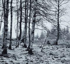 Winterlicht VI