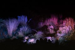 Winterlichter im Palmengarten
