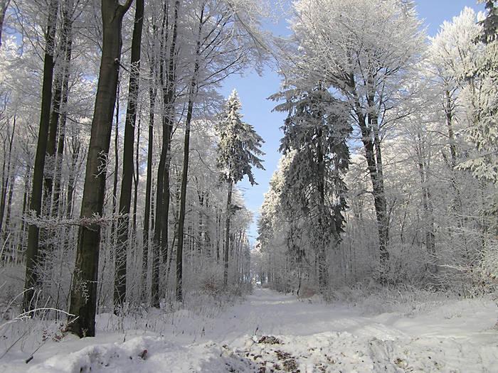 Wintermärchen 4