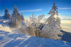 - - - Wintermärchen - - -