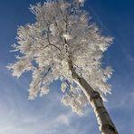 Wintermärchen III