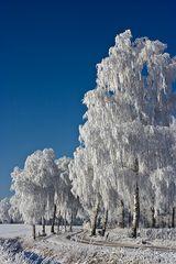 Wintermärchen IV