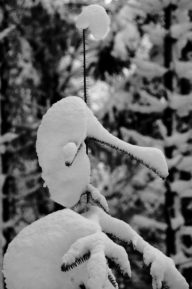Wintermärchengestalt