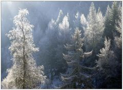 winter.märchen.wald...