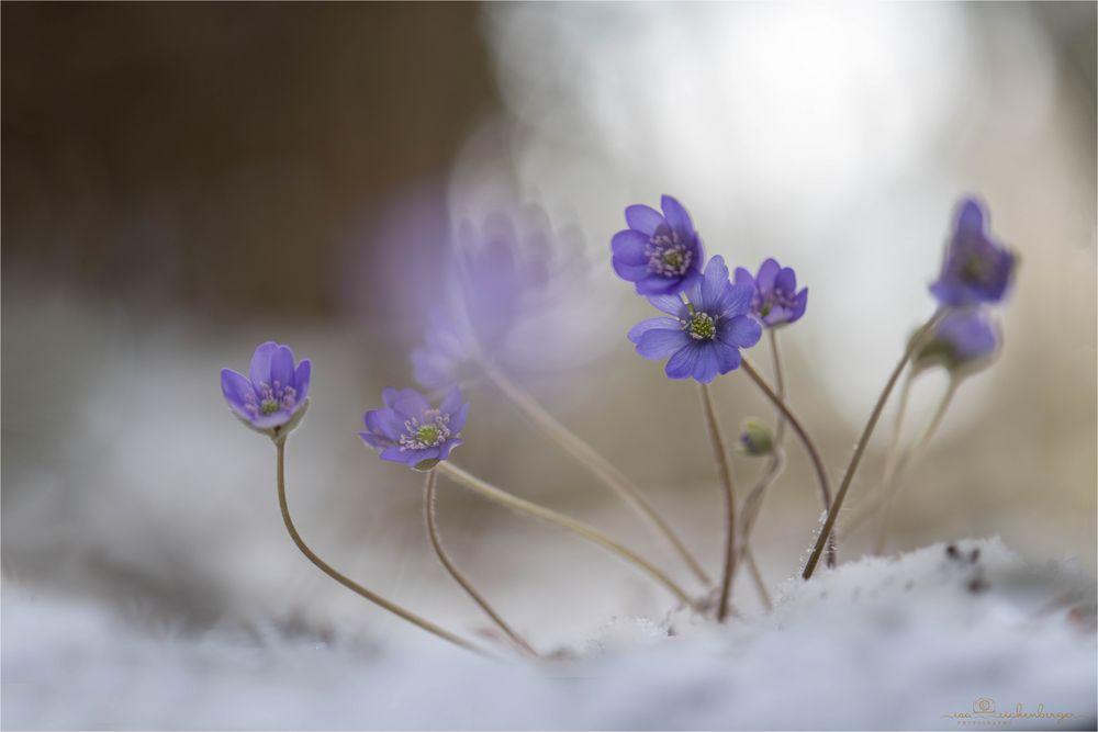 Wintermagie