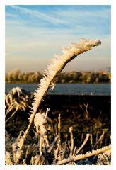 Wintermorgen [2]