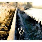 Wintermorgen [4]
