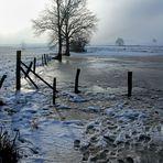 Wintermorgen am Teich