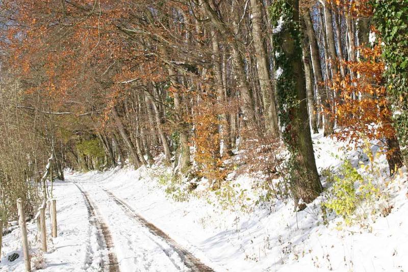 Wintermorgen am Waldrand