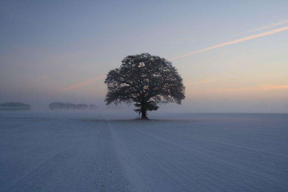 Wintermorgen III