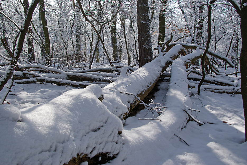 Wintermorgen im Gutspark, 17.02.09 – 28