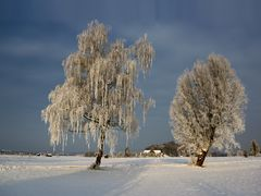 Wintermorgen im Haarmoos