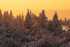 Wintermorgen in den Latschen