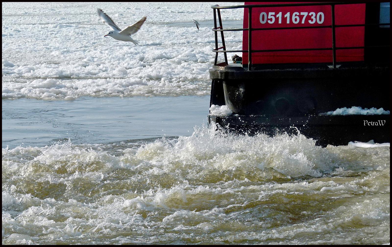 Winternachlese im Hamburger Hafen 6