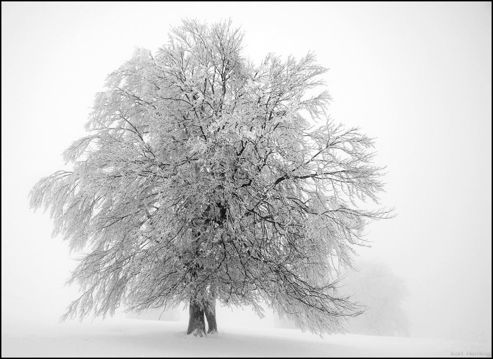Winternebel 2