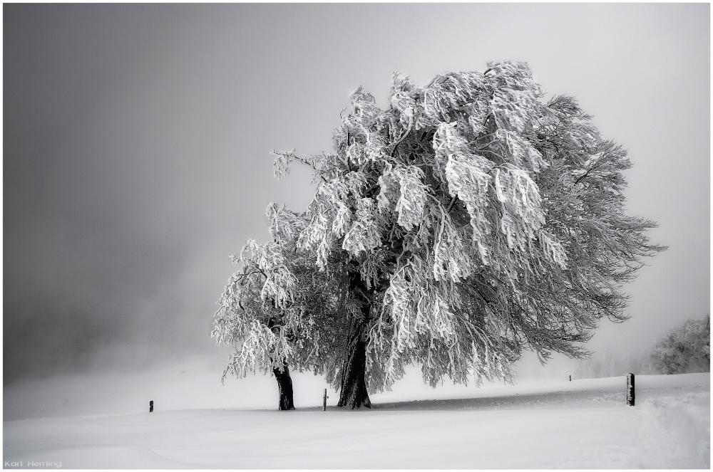 Winternebel 3