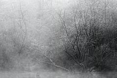 Winternebel im Groschenwasser II