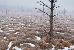 Winternebel im Wurzacher Ried