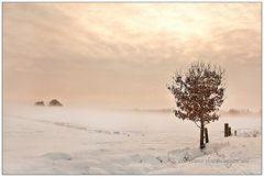 Winternebellicht