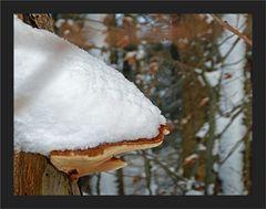 Winterpilz