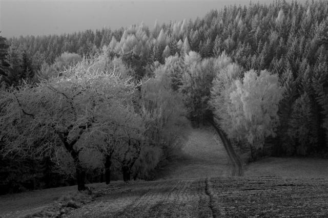 Winterreif