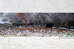 Winterrinder