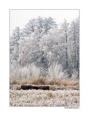 Winterrinder II