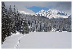 Winterromanze