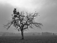 Winter.Ruh IV