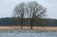 Winterruhe ( II.)