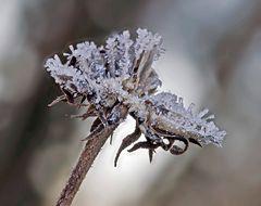 Winters Beißerchen III