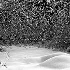Winter's boudoir