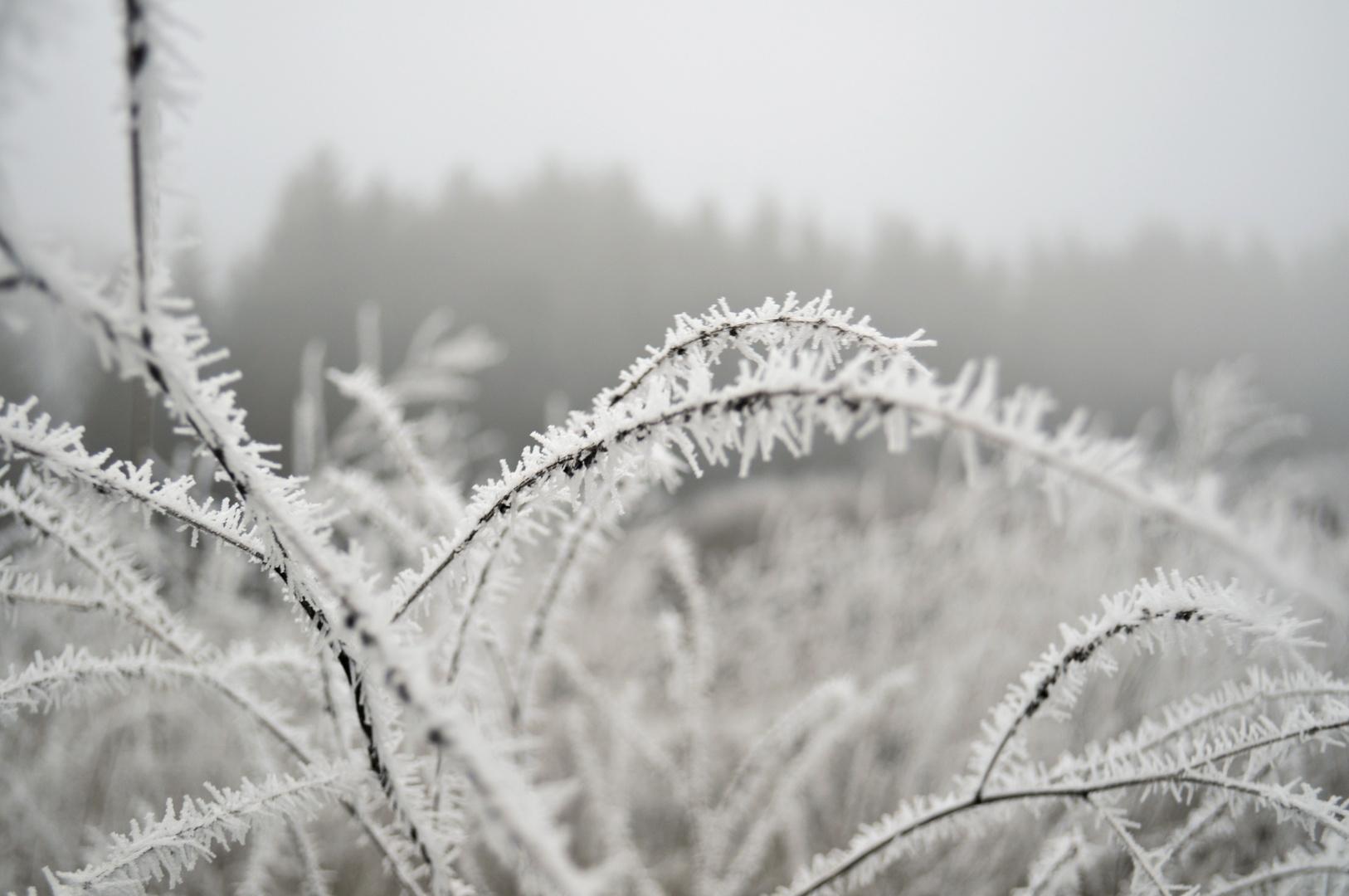 winter's coming.